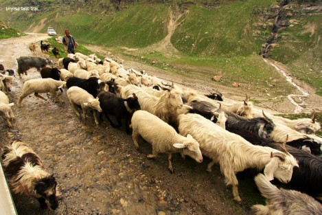as a fellow biker had once remarked to me, this is the most common type of traffic jam around here, the Himalayan style